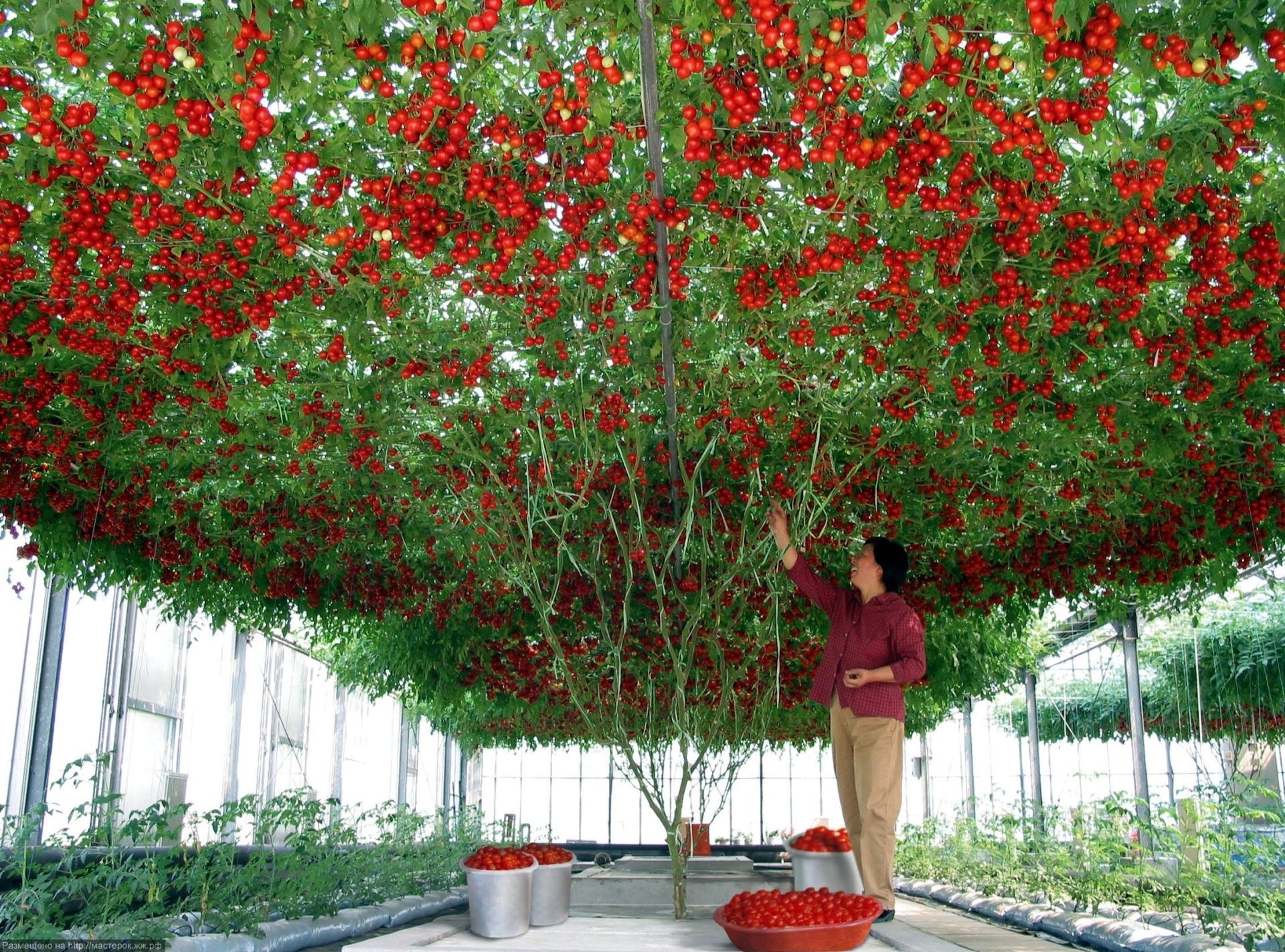 Что выгоднее всего выращивать в теплицах круглый год?